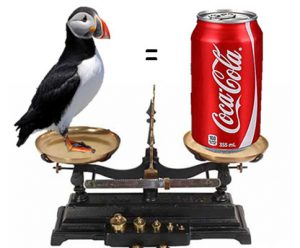 How much does a Puffin weigh