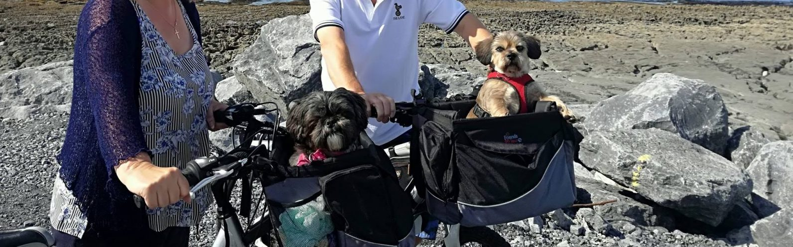 Are Dogs Allowed on Aran Islands Ferry