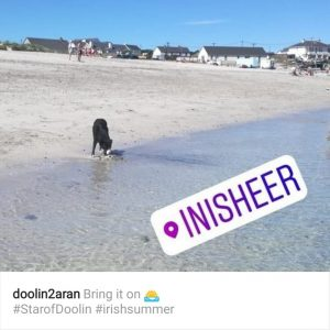 Dog on Inis Oirr Beach, Aran Islands